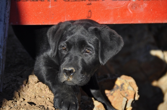 Our new trainee, Fergus
